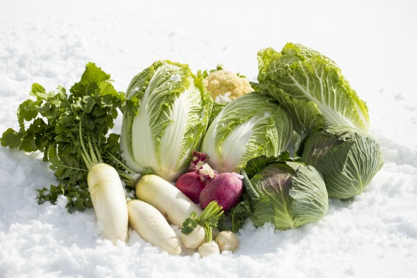 jadlopsis-srodek-zimy-dieta-metabolizm
